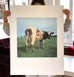 Atom Heart Mother album cover by Hipgnosis